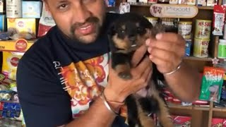 Pet Care - Puppy Head And Body Growth - Bhola Shola