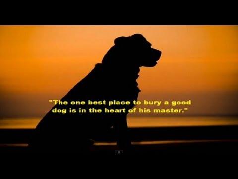Pet Heaven, Saying Goodbye - YouTube