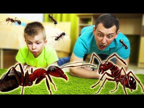 Кого ИСПУГАЛСЯ папа??? Матвей КУПИЛ новых ЖИТЕЛЕЙ!!! Видео для детей Video For Kids Матвей Котофей