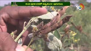 పశు సంరక్షణపై శిక్షణ..| #MattiManishi | Special Program On Lentils Crop Preservation