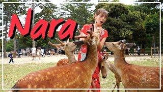 Nara Travel Guide   Bowing Deer + Japanese Street Food Tour