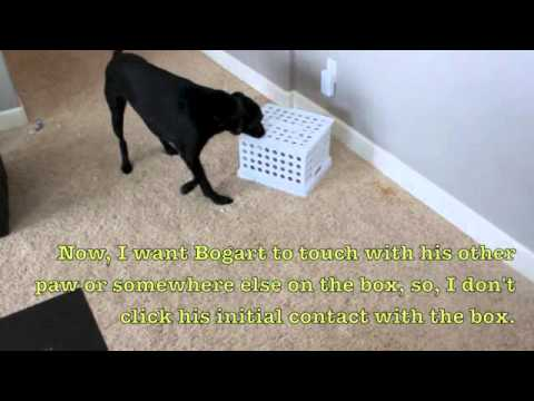 Dog training 101 things to do with a box