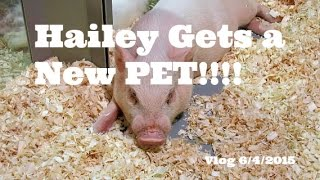 Hailey gets her first pet!! | Vlog 6/4/15