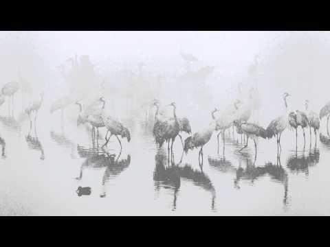 Asher Svidensky Photo Stories - Falling in Love in The Fog