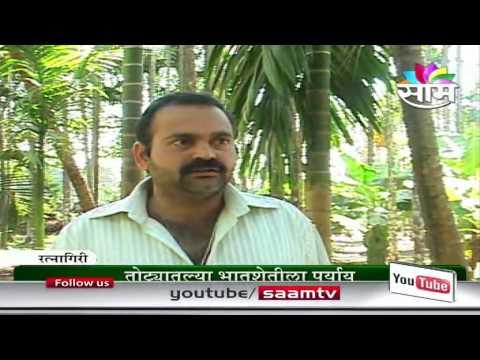 Vijay Joshi's Betel-Coconut success story  AGROWON