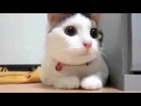 Supercats: Episode 1 &acirc;&Acirc;&nbsp;The Funniest Cat Video!
