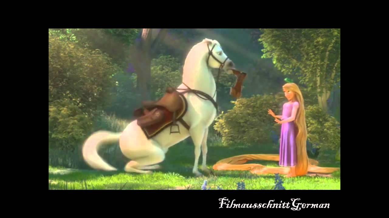 maximus pferd