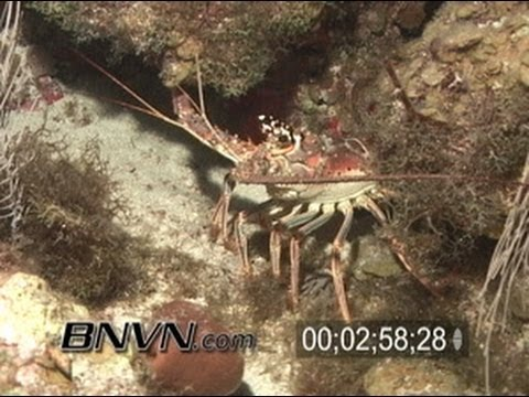 5/15/2004 Night coral reef scuba dive footage