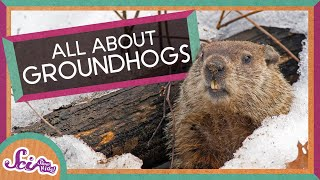 Fun Facts About Groundhogs!