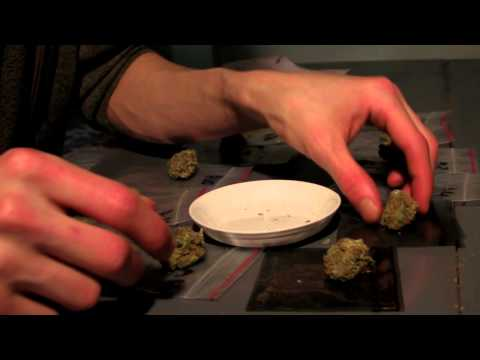 The Highlife (Cannabis) Cup 2012 - Judging the Hydro Category Part 1