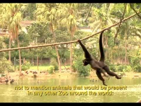Zoológico de São Paulo, o maior da América Latina.