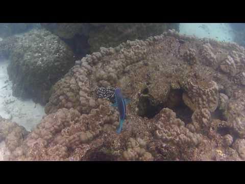 Снорклинг на Пулау Пайяр. Snorkeling on Pulau Payar Marine Park. Langkawi. Malaysia.
