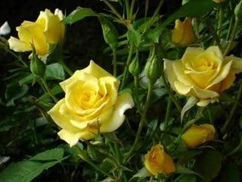 Bobby Darin and Marty Robbins '18 Yellow Roses.'