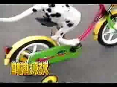 Kerékpározó kutyus
