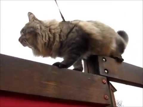 Stay fresh kitten walk med Fluffy - Vlog 29/12 2013