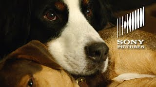 A DOG'S WAY HOME - Shelter Pets Day PSA