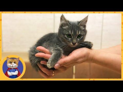 Отдаем спасенного котенка Кузю в добрые руки