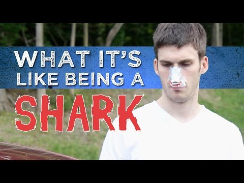 What it's Like Being a Shark