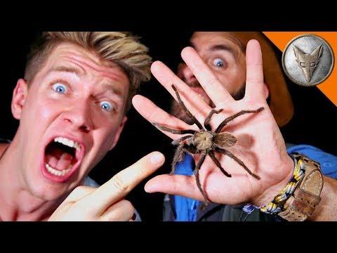 WILD Tarantula Challenge!