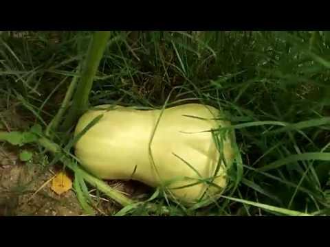 Garten ohne alles ! Tomaten ohne Wasser, ohne Dach und ohne Dünger !!!!!