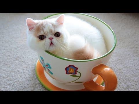ティーカップ猫ちゃん