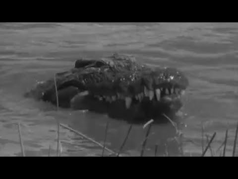 Villagers Worship Crocodiles In Madagascar! - Zoo Quest To Madagascar - Bbc video