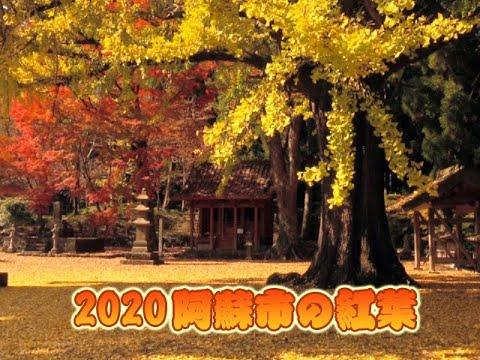 2020 阿蘇市の紅葉