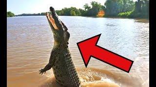 Most DANGEROUS Animals in Australia