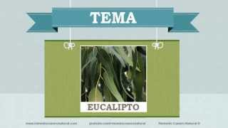 Beneficios, nutrientes y propiedades del eucalipto