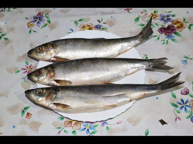 Засолить рыбу в домашних условиях селедку