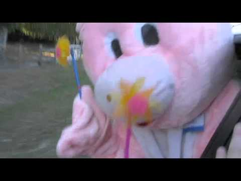 Geico Pig Commercial video