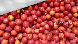 Health Benefits of Albakara Fruit | albakara fruit during pregnancy | side effects,tips