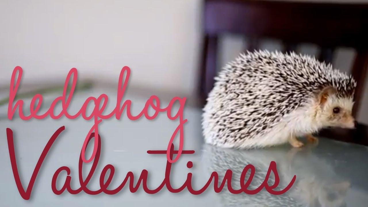 HEDGEHOG VALENTINES DAY E CARD YouTube
