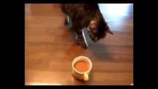 Кот против кофе