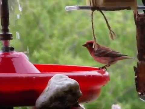 Fabriquer Un Bain Fontaine Lectrique Pour Oiseaux YouTube