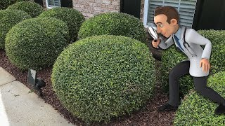 Trimming Round Ball Bushes