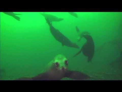 Redondo Beach, California, scuba, diving, sea lions, artificial reef, C-Dory, Tomcat, Sony HC9, Nikon D700