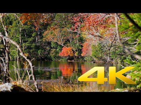 Autumn colors around Nikko - Tochigi -日光の紅葉 - 4K Ultra HD