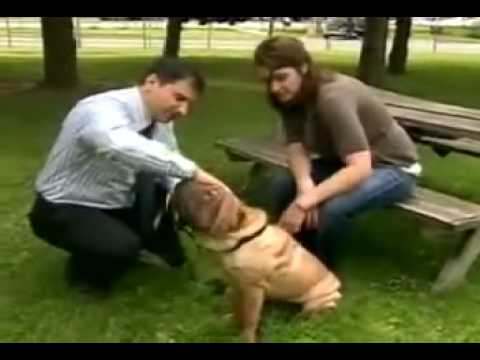 CFTO-TV - CTV NEWS - Franco Cavaleri - Obese Pets