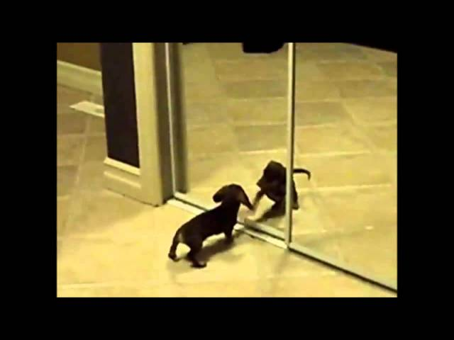 Funny Dog Videos New Partt