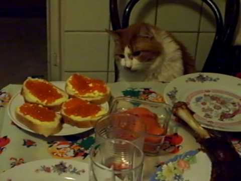 Кот и икра. Так у нас коты ужинают.