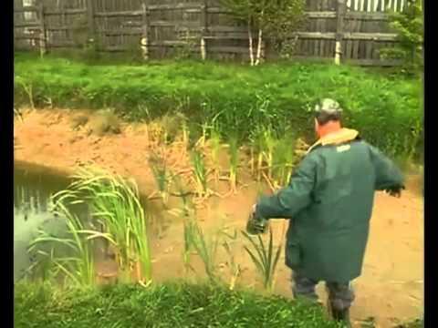 В Рыбинске завелись караси мутанты
