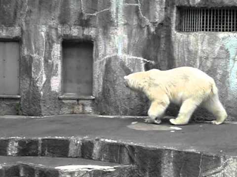 今日も素直に帰宅するキロル 浜松市動物園 2011/6/12