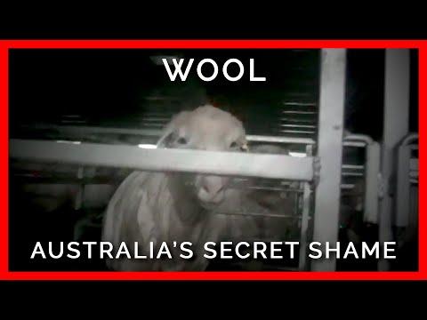 Wool: Australia's Secret Shame