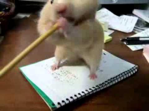 Хомяк хочет съесть карандаш))