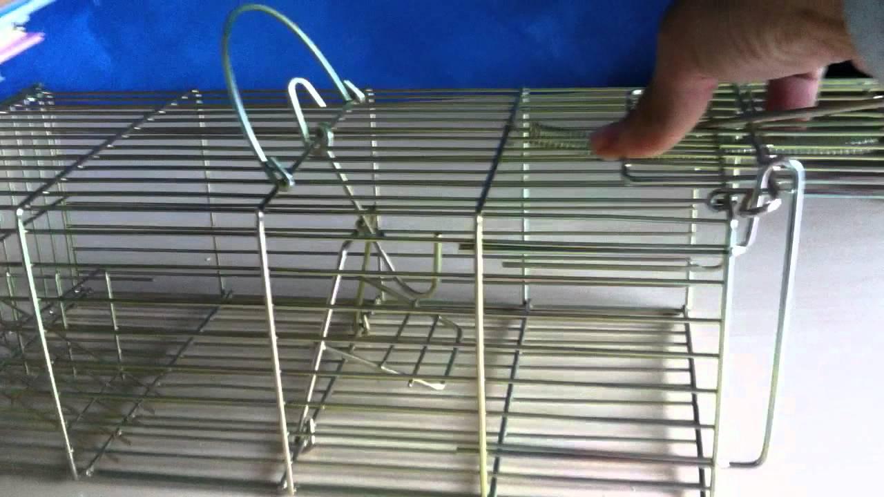 Jaula trampa multicapturas para capturar ratas ratones y otros roedores youtube - Construir trampa para ratas ...