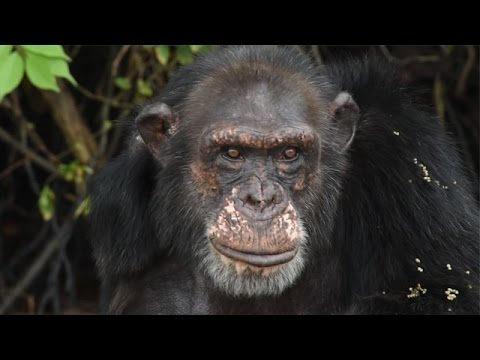 Rooney and Kate Mara Visit Abandoned Chimpanzees in Liberia