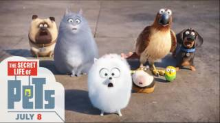 Secrete Life Of Pets Download Fu;l Movie
