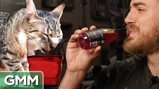 Testing Wine For Cats