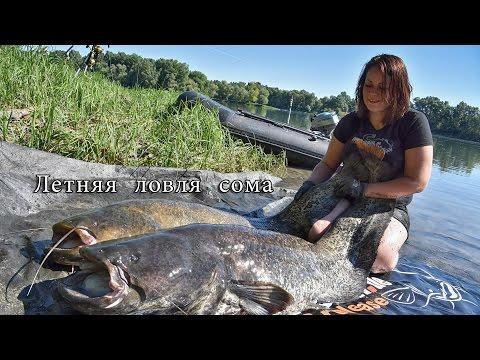 Рыбалка на сома летом 2016